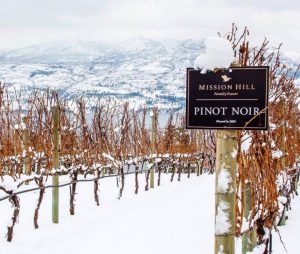 Experience our winter wine tour to Mission Hill Family Estate Winery.